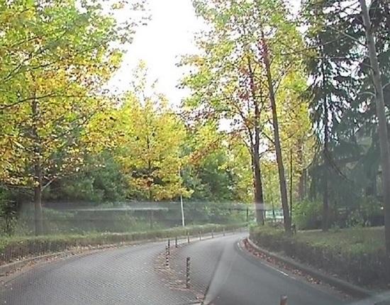 牧野が池の紅葉2.jpg